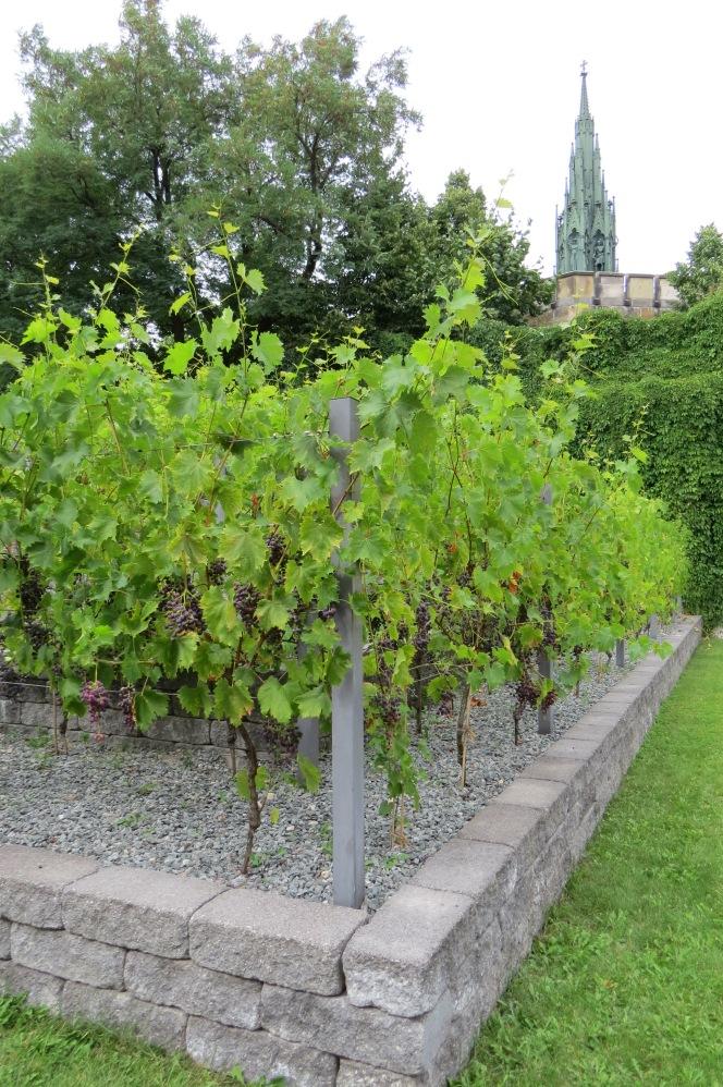 Weinanbau am Kreuzberg